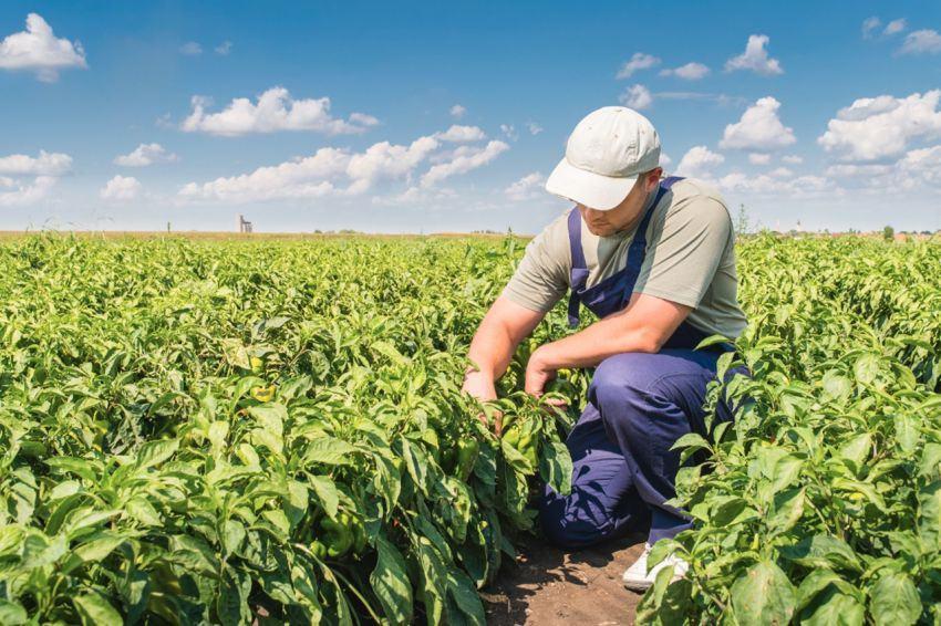 Nghề Farm Worker tại Canada 2020